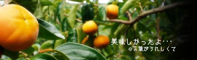 九度山産「富有柿」